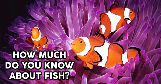 How Much Do You Know About Fish?