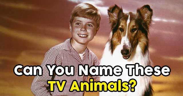 Can You Name These TV Animals?