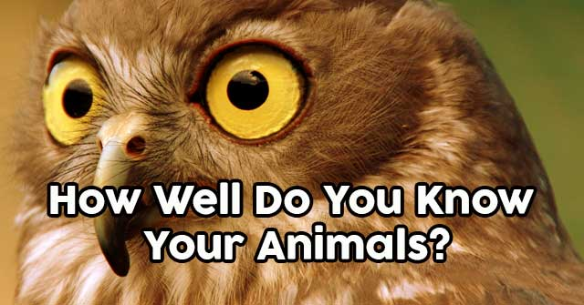 How Well Do You Know Your Animals?