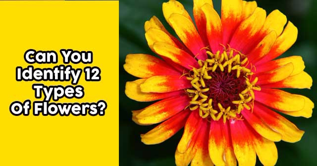 Can You Identify 12 Types Of Flowers?