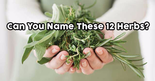 Can You Name These 12 Herbs?