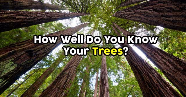 How Well Do You Know Your Trees?