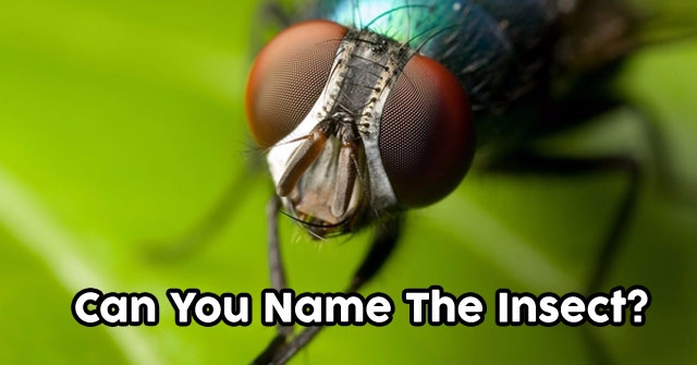 Can You Name The Insect?