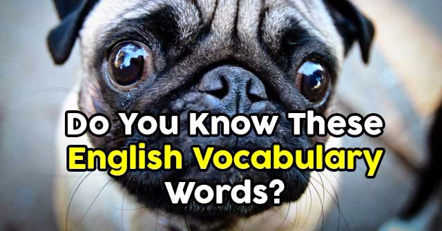 Do You Know These English Vocabulary Words?