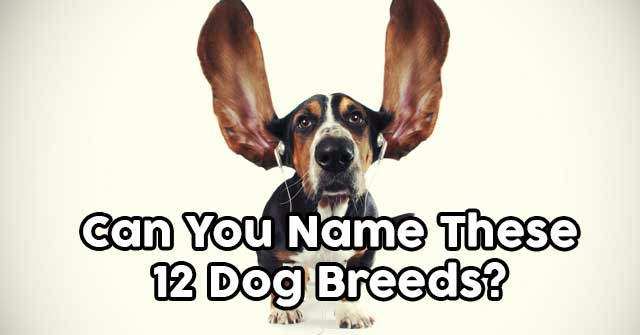 Can You Name These 12 Dog Breeds?
