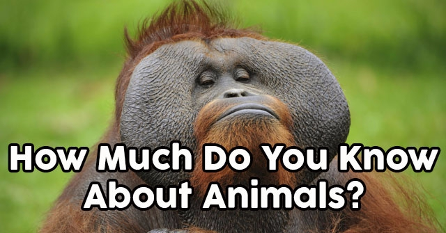 How Much Do You Know About Animals?