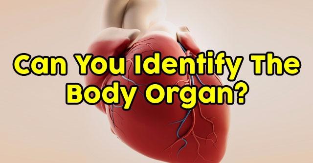 Can You Identify The Body Organ?