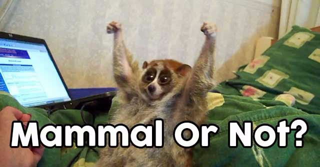 Can You Guess Which Of These Animals Are Mammals?