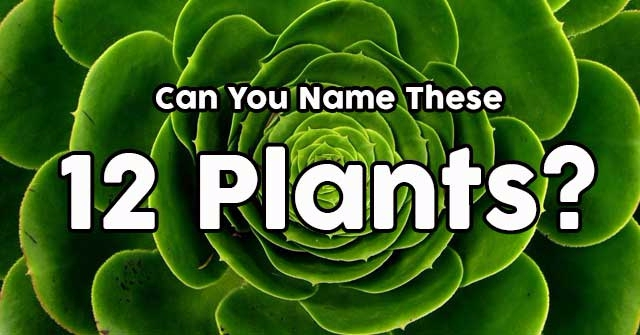 Can You Name These 12 Plants?