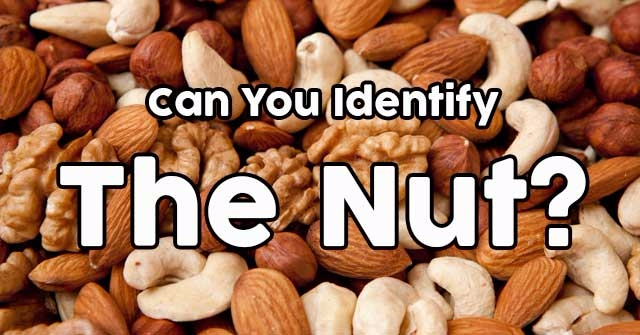 Can You Identify The Nut?