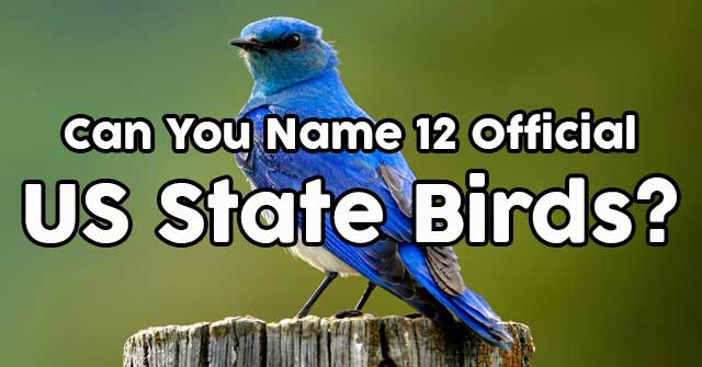 Can You Name 12 Official US State Birds?