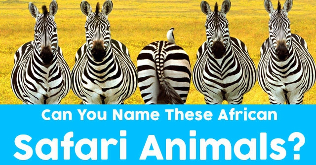 Can You Name These African Safari Animals?