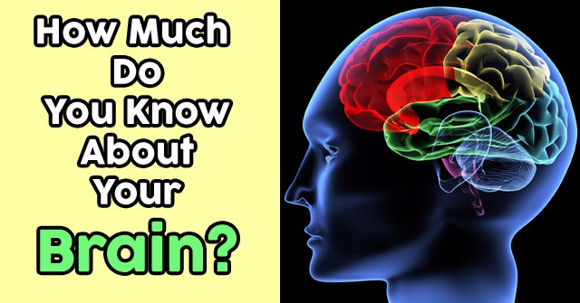 How Much Do You Know About Your Brain?
