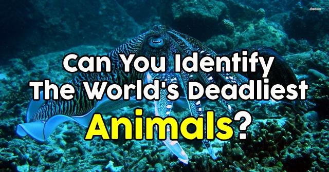 Can You Identify The World's Deadliest Animals?
