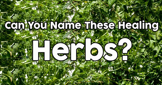 Can You Name These Healing Herbs?