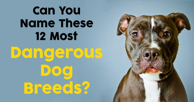 Can You Name These 12 Most Dangerous Dog Breeds?