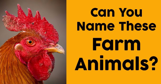 Can You Name These Farm Animals?
