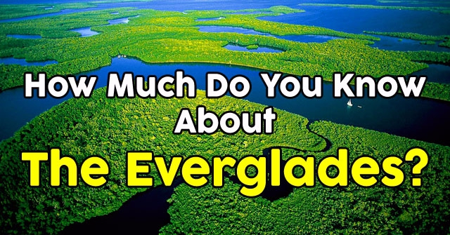 How Much Do You Know About The Everglades?