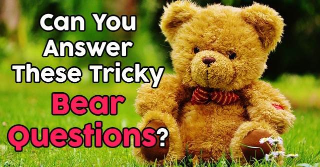 Can You Answer These Tricky Bear Questions?