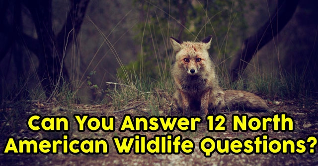 Can You Answer 12 North American Wildlife Questions?