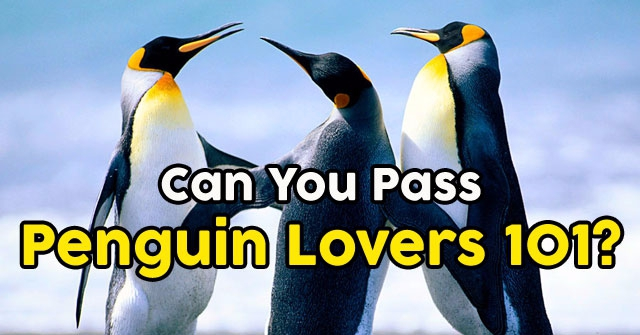 Can You Pass Penguin Lovers 101?