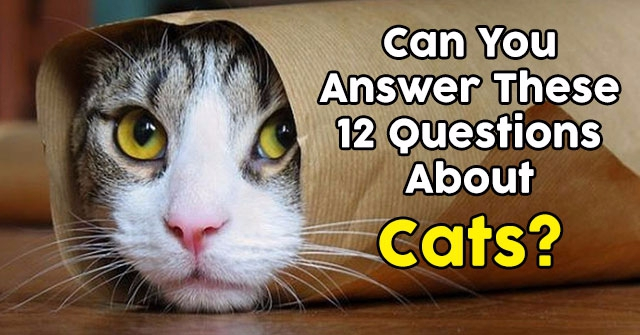 Can You Answer These 12 Questions About Cats?