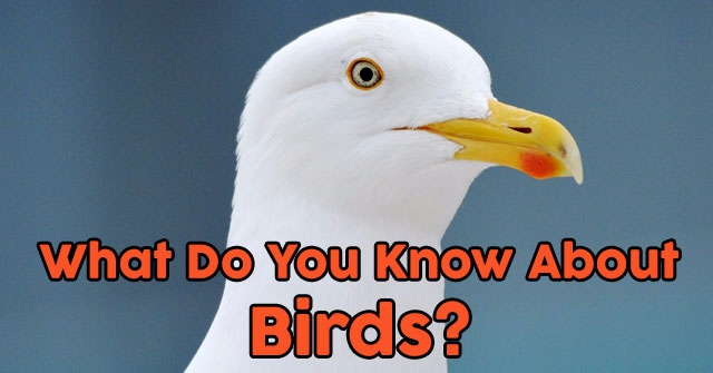 What Do You Know About Birds?