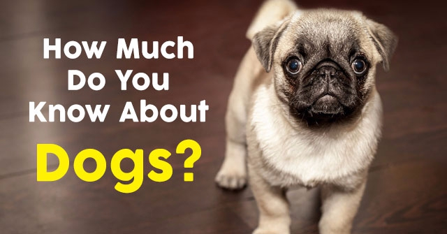 How Much Do You Know About Dogs?