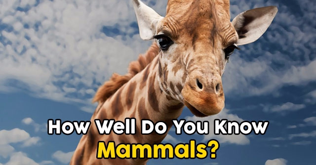 How Well Do You Know Mammals?