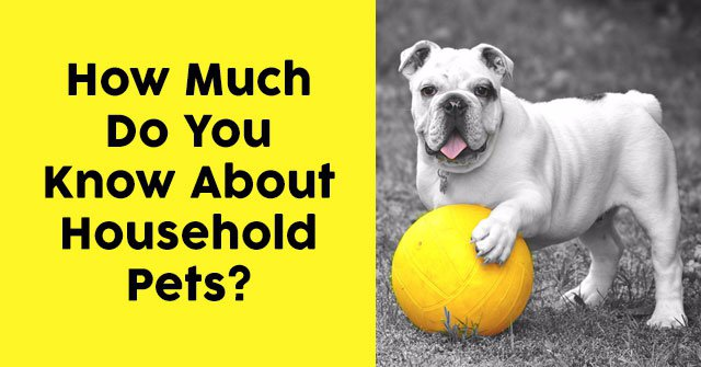 How Much Do You Know About Household Pets?