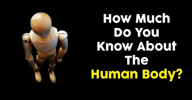 How Much Do You Know About The Human Body?