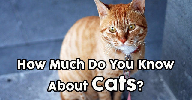 How Much Do You Know About Cats?