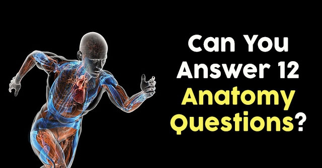 Can You Answer 12 Anatomy Questions?