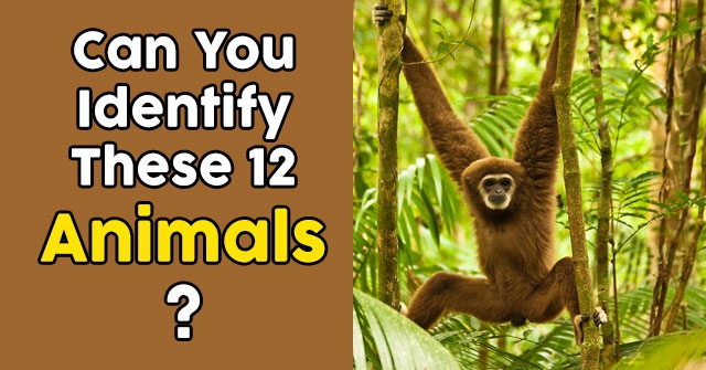 Can You Identify These 12 Animals?