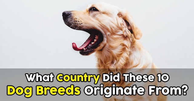 What Country Did These 10 Dog Breeds Originate From?