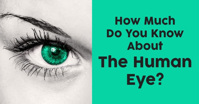 How Much Do You Know About The Human Eye?