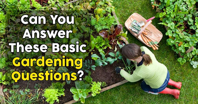 Can You Answer These Basic Gardening Questions?