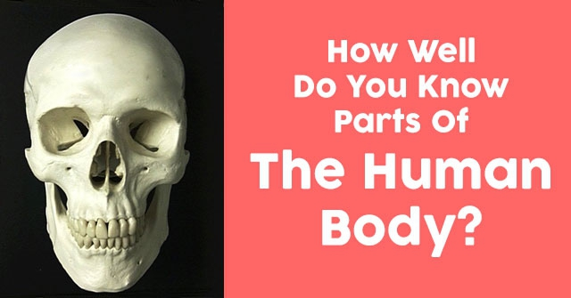 How Well Do You Know Parts Of The Human Body?