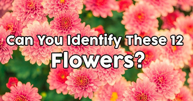 Can You Identify These 12 Flowers?
