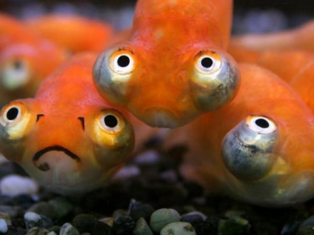 How much do you know about fish quizpug for What fish has eyelids