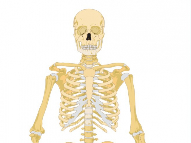 Can You Answer These 12 Human Anatomy Questions Quizpug
