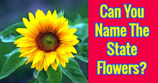Can You Name The State Flowers?