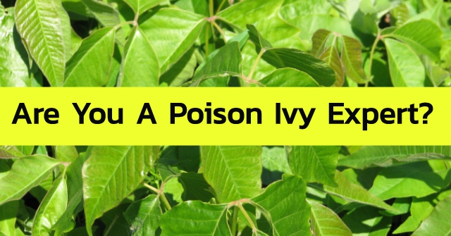 Are You A Poison Ivy Expert?