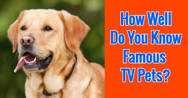 How Well Do You Know Famous TV Pets?