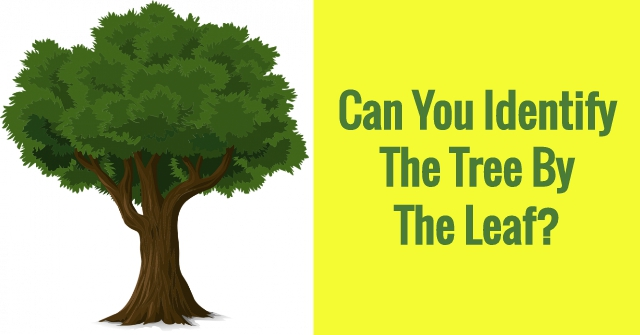 Can You Identify The Tree By The Leaf?