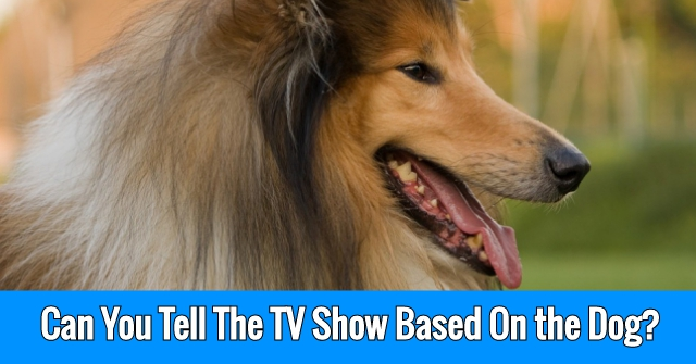 Can You Tell The TV Show Based On the Dog?