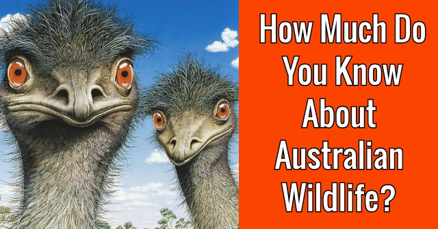 How Much Do You Know About Australian Wildlife?