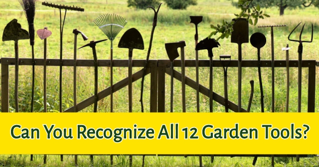 Can You Recognize All 12 Garden Tools?