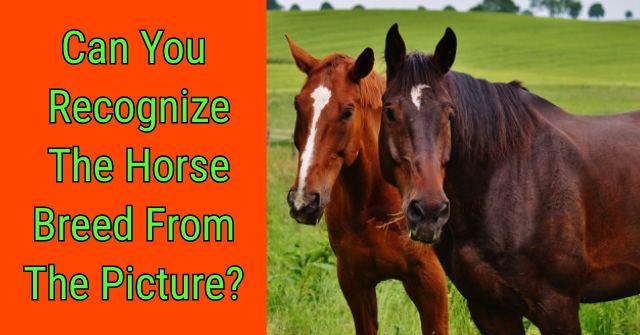 Can You Recognize The Horse Breed From The Picture?