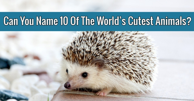 Can You Name 10 Of The World's Cutest Animals?